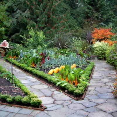 backyard vegetable garden ideas