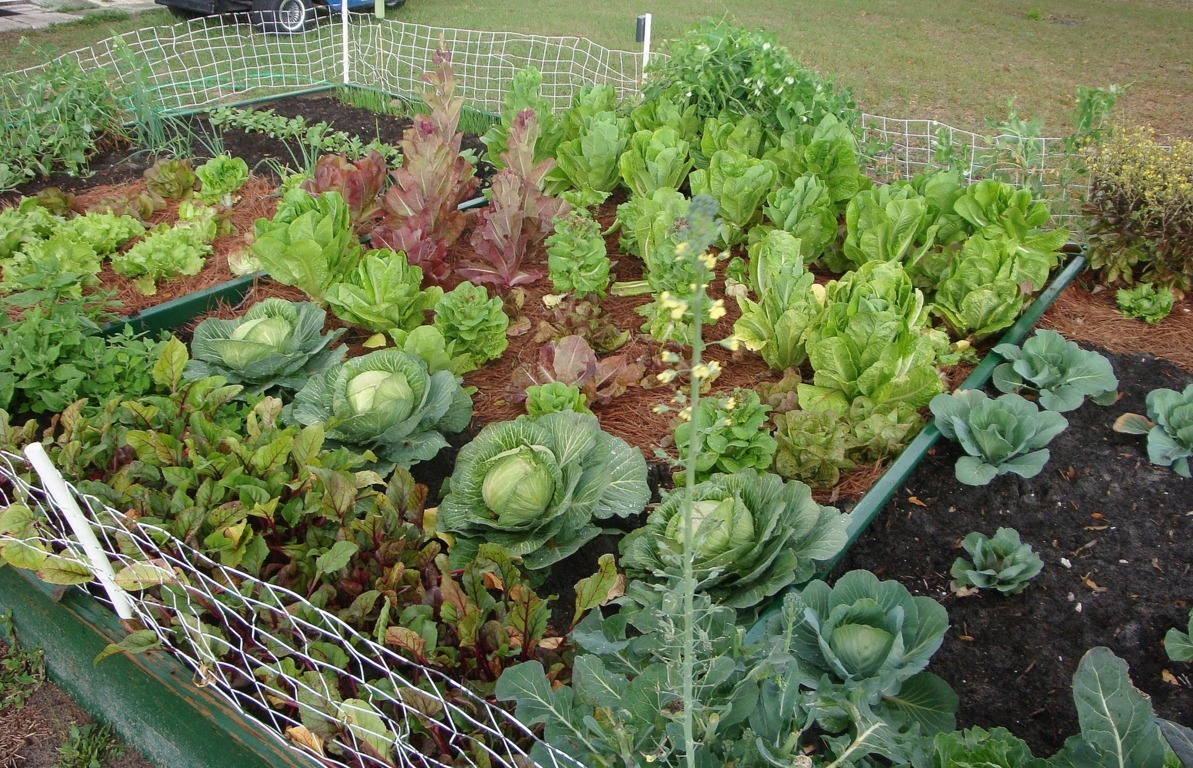 beautiful vegetable garden ideas