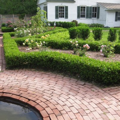 Evergreen Landscaping plants