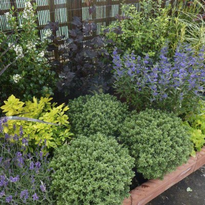 Low maintenance garden to the efficiency of your garden for Low maintenance flowers outdoor