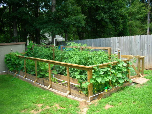 Backyard Garden Vegetables