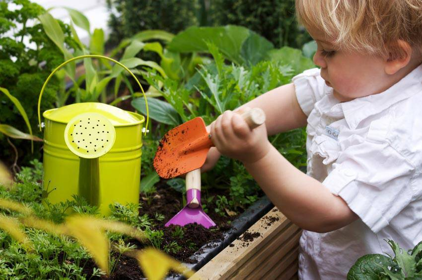 Planting Ideas for Kid