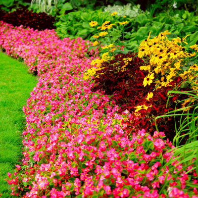 The Best Landscaping For Your Home